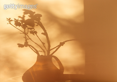 Shadows of plants. Horse chestnut tree buds on sunny April day. Growing leaves in a glass vase.