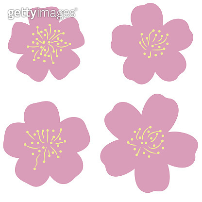 simple cherry blossoms vector illustration