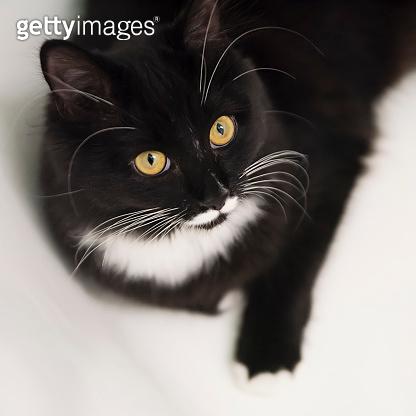 Tuxedo cat resting in the bathtub.