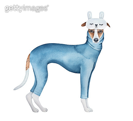 Cute little whippet dog dressed in navy blue cotton pajamas with long sleeves and fluffy sleep mask with cozy rabbit ears. Hand painted watercolour graphic sketch, cut out clipart element for design.