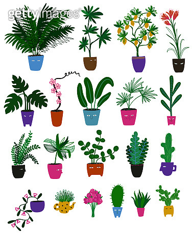 Collection of indoor plants with funny face pots