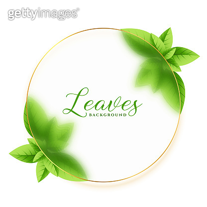 green leaves frame eco background