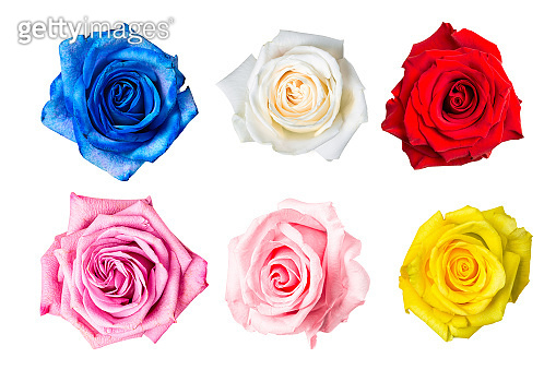 Beautiful colorful rose buds collage set isolated on white background