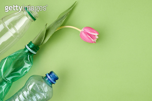 flat lay with tulip and plastic bottles isolated on green