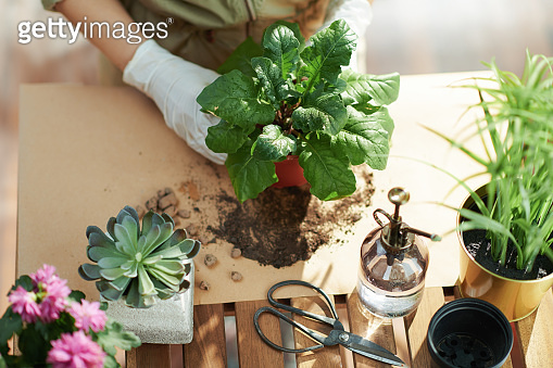 Upper view of woman in rubber gloves in sunny day do gardening