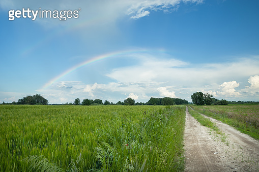 Country road next to the green field, rainbow in the sky