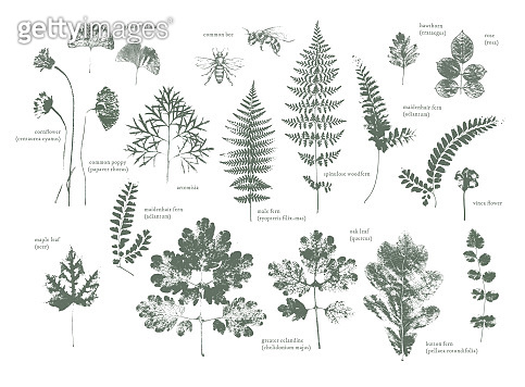 Set of dried herbs and natural plants and bees - herbarium logo collection