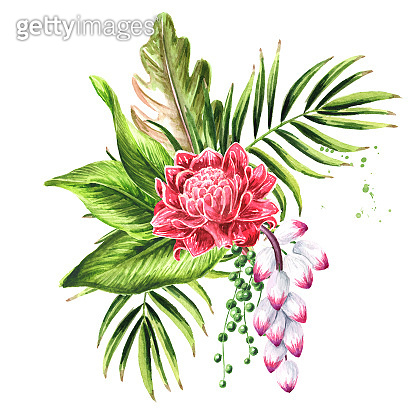 Leaves and flowers of exotic tropical or jungle plants composition, Watercolor hand drawn illustration isolated on white background