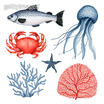 Watercolor underwater wild animal set. Jellyfish, Crab, Starfish, Coral, Seaweed and Fish. Sea Life collection. Hand drawn marine clipart, design elements isolated