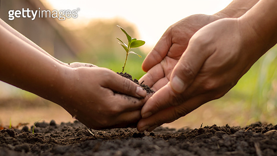 Children and adults work together to plant small trees in the garden, planting ideas to reduce air pollution or PM2.5 and reduce global warming.