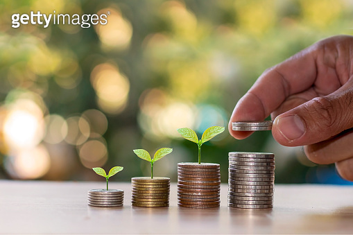 Small trees are growing on a pile of coins, the idea of developing a financial system and growing the economy.