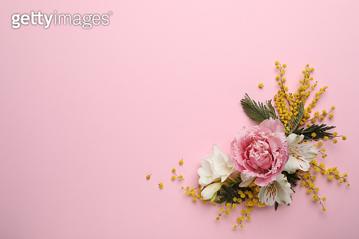Beautiful floral composition with mimosa flowers on pink background, flat lay. Space for text
