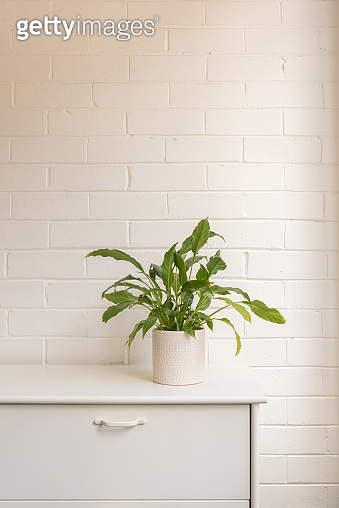 Green leafy pot plant on white dresser against brick wall