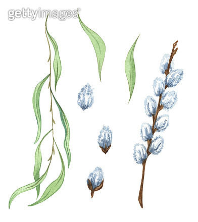 Watercolor set of willow branches. Spring twigs. Easter decorations. Hand drawn elements isolated on white background.