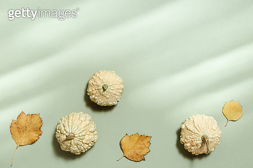 Decorative small pumpkins and autumnal yellow leaves Autumn, fall, halloween concept.