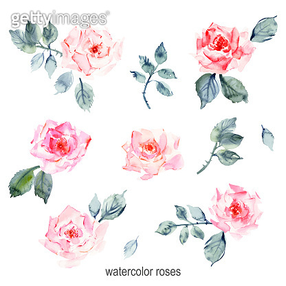 Hand drawn watercolor rose flowers, leaves and branches, pink stains
