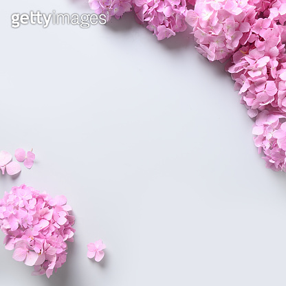 Pink hydrangea flowers as square frame on grey background. Greeting card.