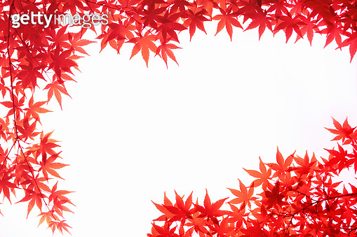 Maple leaf frame with autumn leaves