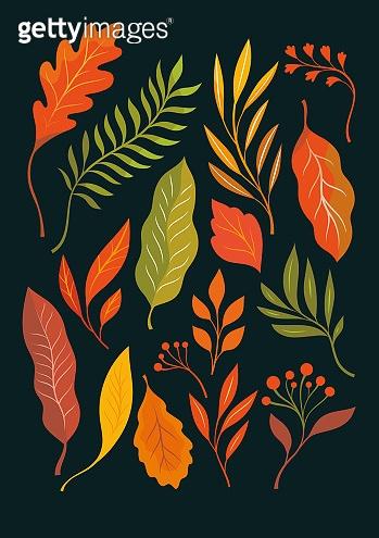 Autumn leaves, illustration on black background. Oak leaves, maple leaf  falling.