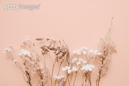 Romantic dried flowers on pink background. Dried twigs of plants and flowers.