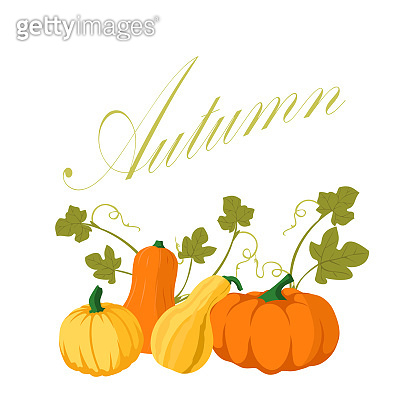 Pumpkin - squash for Halloween or Thanksgiving. Orange squash silhouette isolated on white background.