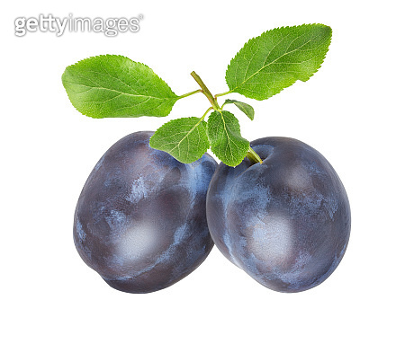 Plums on a branch with leaves isolated on white background with clipping path