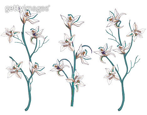 Set of tropical flowers vanilla and lilies cut out on a white background. Branches with hand-drawn flowers. Vector illustration.