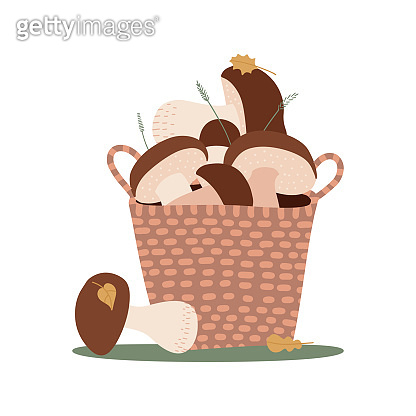 Wicker Basket with porchini mushrooms isolated on white background. Set of cut edible wild forest mushrooms. Vector cartoon flat hand drawn illustration.