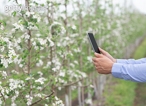 Gardener checks condition and availability of flowers, with entries in tablet