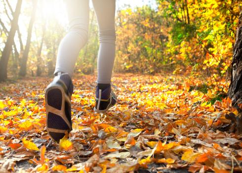 가을마운트트래킹