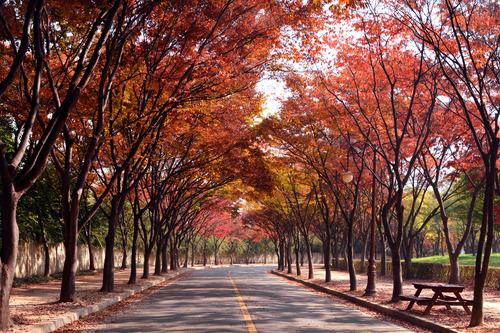가을 단풍길
