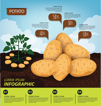 Vegetable Infographic