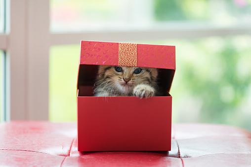 Kitten in the Box