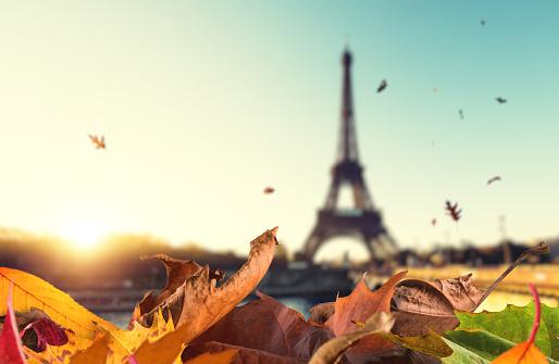 가을이 떨어진다