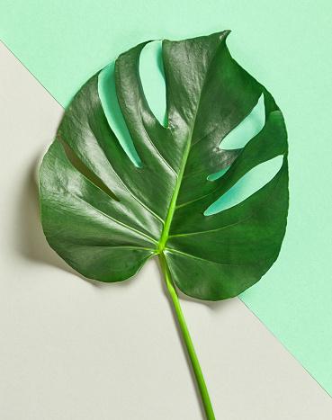 leaves frame & background