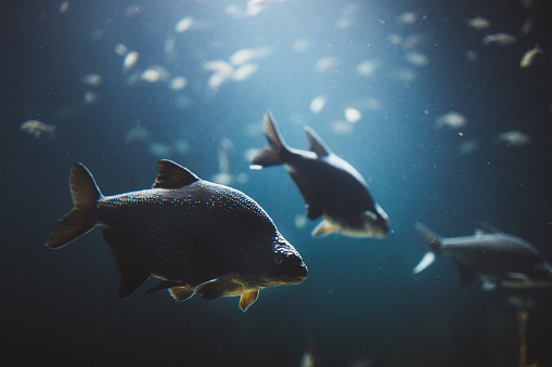 Group of fish swimming