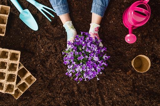 꽃을 심어요