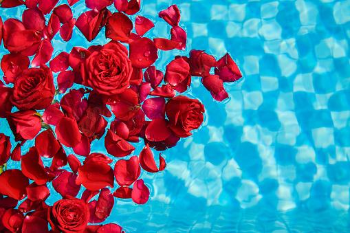 rose petals floating on pool