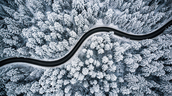 Snow covered trees and road line