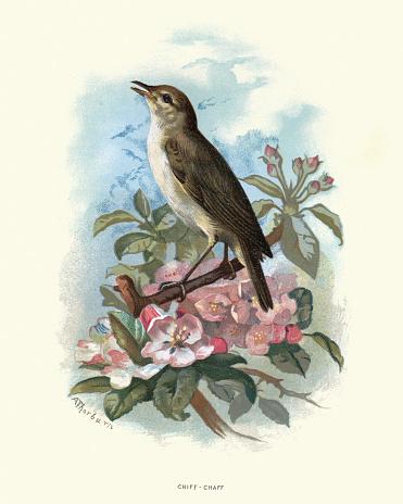Natural history, Birds