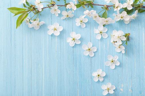 Flowers on background