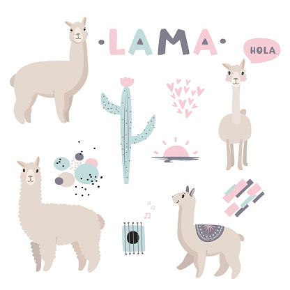 alpaca & cactus