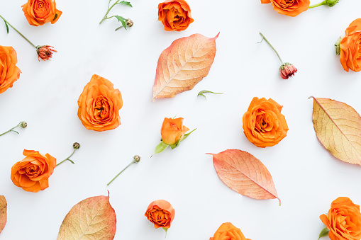 Fall red leaves and orange roses