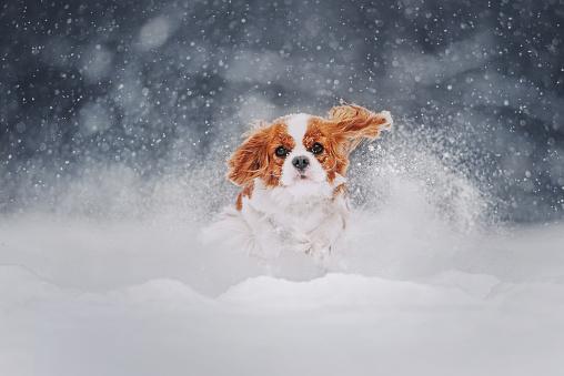 강아지의 재미있는 겨울산책