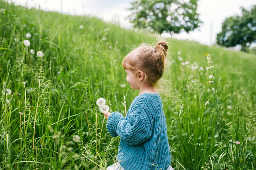 Little girl with dandelion on green grass background