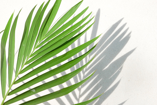 Texture of shadows palm leaves