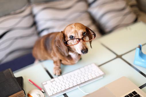 열심히 일하는 강아지