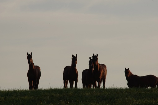 Horses in evening sunlight