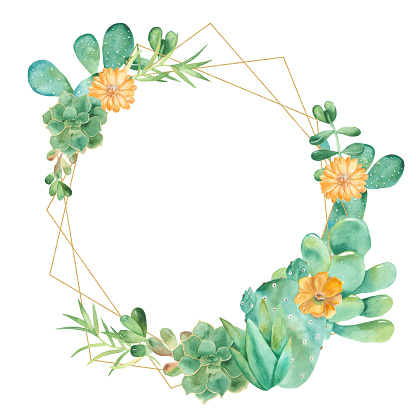 Succulents illustration
