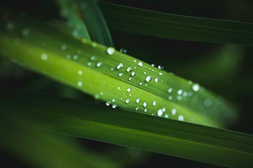 풀잎 클로즈업